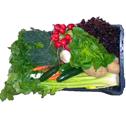 Cassetta mista di verdure