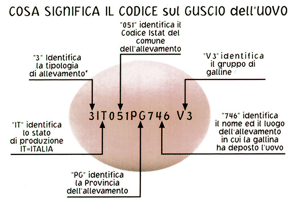 codice-galline-1-580