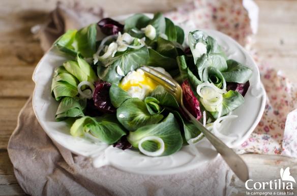 insalata cicorino e cipollotto