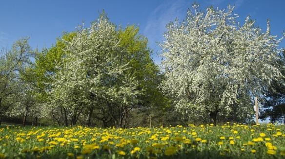 meadow-107274_640