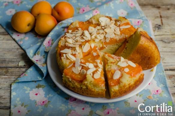 torta di albicocche3R